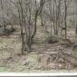 Докато чаках снимах и гората
